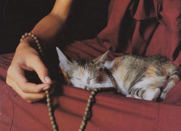Fortlaufende Meditationsgruppen im Zentrum auch im November